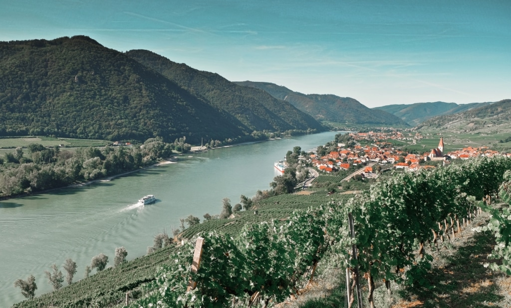 Wachau Blick auf Weinberge
