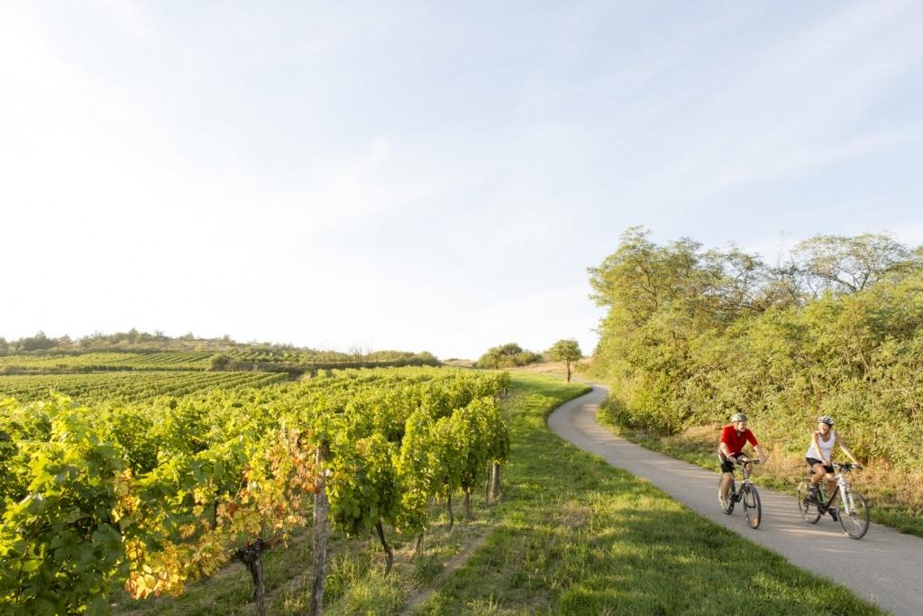 Radfahren durch die Wachau